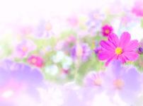 美しく咲くお花