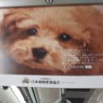 真っ直ぐに見つめるワンコ(日本動物愛護協会 公益社団法人ACジャパンのHPより)