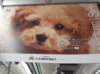 真っ直ぐに見つめるワンコ(日本動物愛護協会|公益社団法人ACジャパンのHPより)