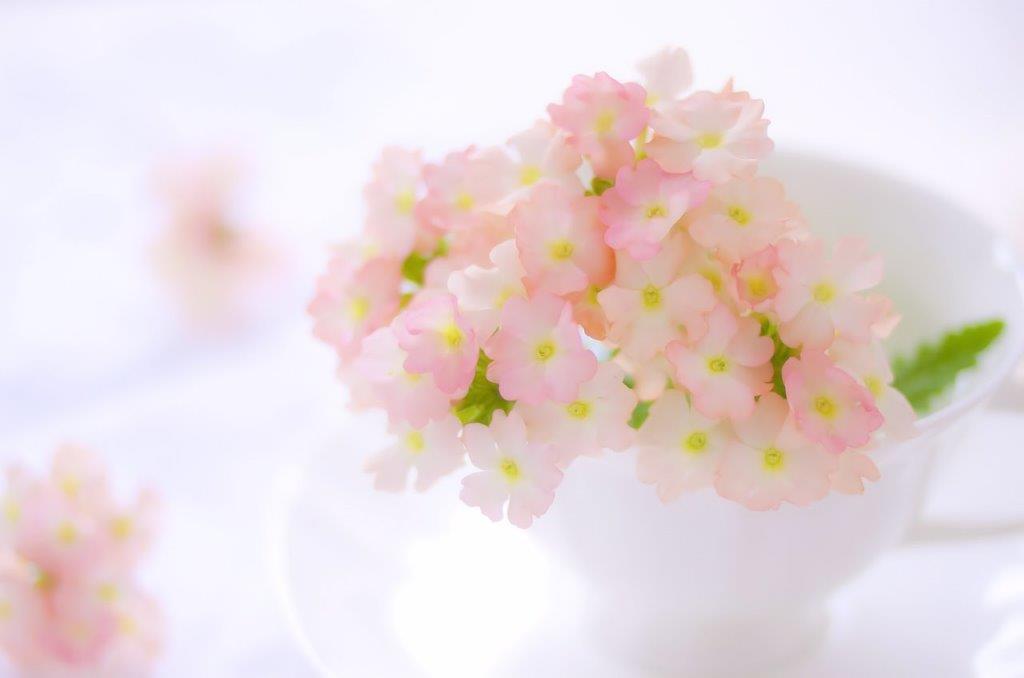 キレイなピンク色のお花のイメージ
